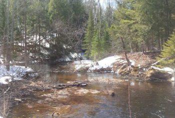 River in Spring 2