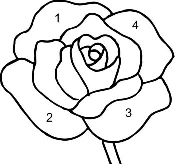 rose-drawing